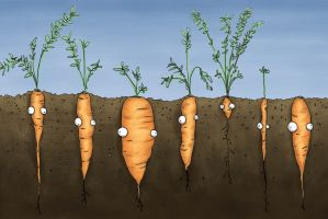 Carrots featured image