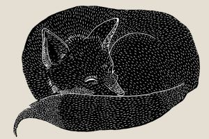 Sleeping Fox featured image