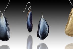 Maine Mussel Shell Set featured image