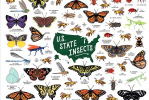 U.S. State Insects featured image