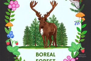 Save the Boreal Forest Poster
