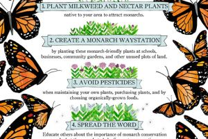 4 Things You Can Do to Help the Monarchs