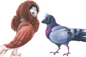 The Pigeon and the Pauper