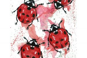 Lady Bug featured image