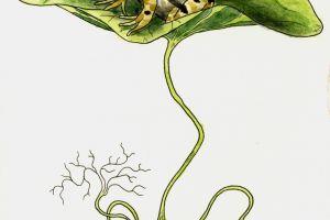 Illustrated Animal Series featured image