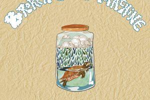 Turtle in a jar