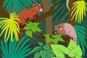 Coati featured image