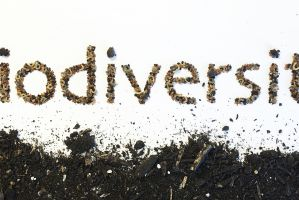 Biodiversity Banner featured image